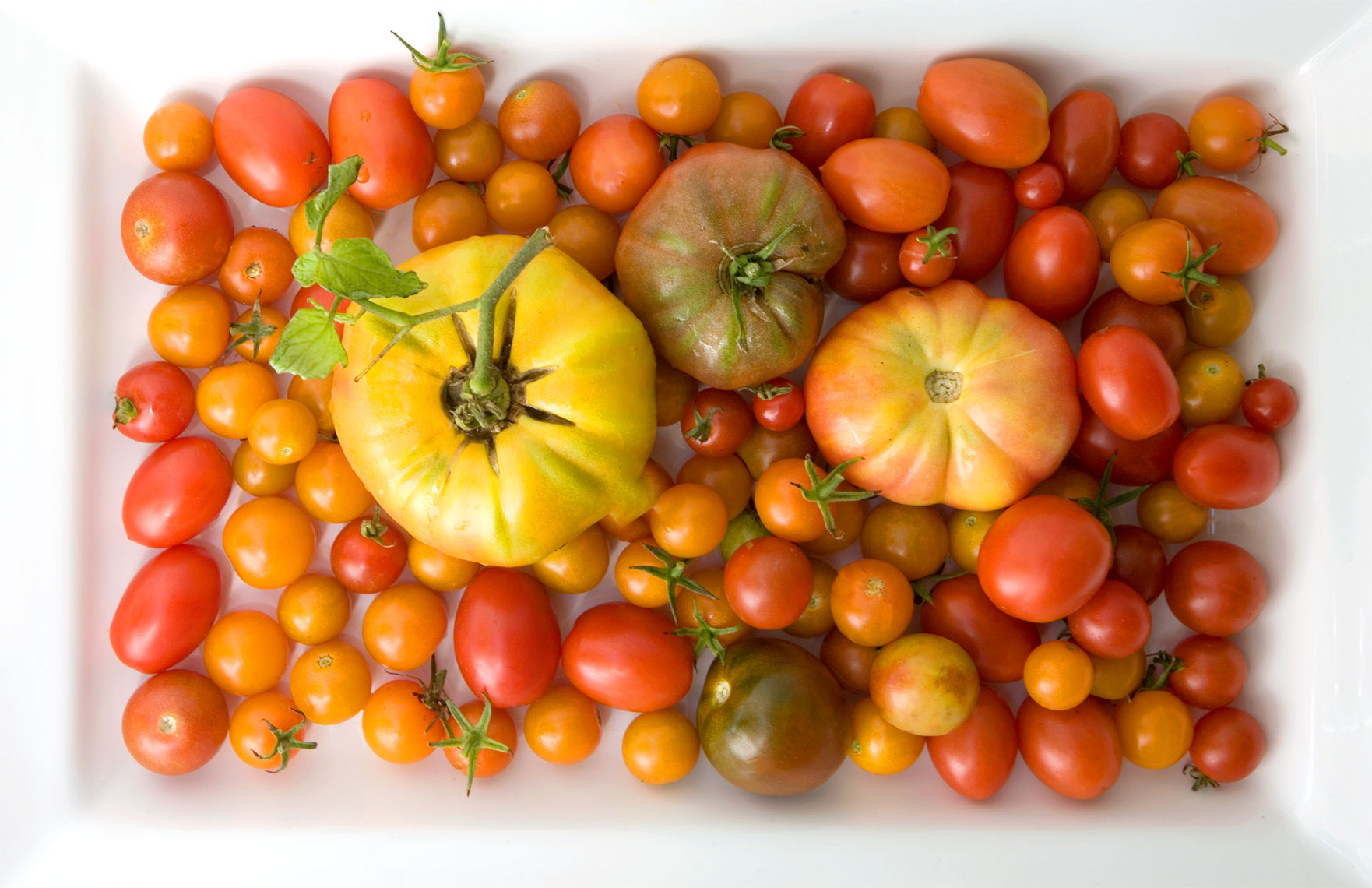 mixedtomatoes4_MG_4433_portfolio